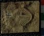 PE478_fossil