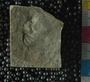 PE2766_fossil