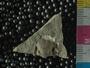 PE2771_fossil