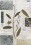 Kickxia macgregori Elmer, PHILIPPINES, A. D. E. Elmer 12373, Isotype, F