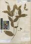 Tabernaemontana rupicola Benth., BRITISH GUIANA [Guyana], R. H. Schomburgk 898, Isotype, F