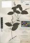 Thyrsanthus gracilis Benth., BRITISH GUIANA [Guyana], R. H. Schomburgk 608, Isotype, F