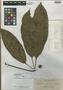 Schefflera apoensis Elmer, Philippines, A. D. E. Elmer 10488, Isotype, F