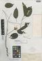 Schefflera urdanetensis Elmer, Philippines, A. D. E. Elmer 14075, Isotype, F