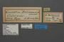 95111 Geometra bellonaria HT labels IN