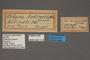 95116 Ochyria anticostiata HT labels IN