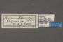 95122 Fidonia edmondsii HT labels IN