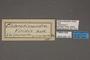 95127 Chlorotimandra viridis T 1of4 labels IN
