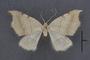 95127 Chlorotimandra viridis T 1of4 d IN