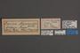 95151 Surina hypsoides HT labels IN