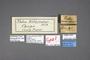 95185 Tolna versicolor HT labels IN