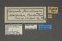 95200 Catocala desiderata T labels IN