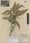 Kopsia pitardii Merr., VIETNAM, J. B. L. Pierre 32, Isotype, F