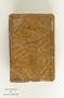 Manilkara zapota (L.) P. Royen, Chicle, Mexico, Philadelphia Museums B701, F
