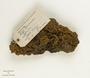 Hevea benthamiana Müll. Arg., Bark Lace Rubber, Venezuela, Ll. Williams, F