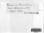 Grimmia doniana image