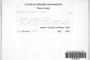 Grimmia alpestris image