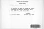 Grimmia elatior image