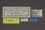95221 Parnassius staudingeri T labels IN
