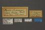 95228 Papilio copanae HT labels IN