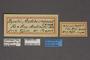 95231 Papilio anticostiensis HT labels IN