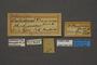 95239 Callidryas thauruma HT labels IN