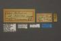 95246 Colias philodice nigrina HT labels IN