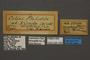 95249 Colias philodice virida HT labels IN