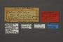 95245 Colias pelidine gigantea LT labels IN