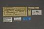 95269 Leptalis lydamis HT labels IN