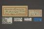 95271 Anartia dominica HT labels IN