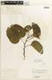 Bauhinia monandra image