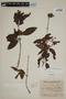 Campomanesia guazumifolia (Cambess.) O. Berg, ARGENTINA, F