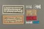 95313 Melinaea dora HT labels IN