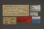 95318 Hymenitis sasunga HT labels IN