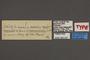 95337 Colias vautierii minuscula T labels IN