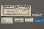 95049 Antheraea intermiscens HT labels IN