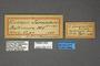 95073 Endropia jucundaria HT labels IN