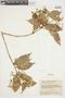 Myrcia mollis (Kunth) DC., VENEZUELA, F