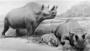 Titanotheres, Brontops robustus Restoration group diorama by Frederick Blaschke.