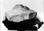 Trilobite specimen Fossil invertebrate Geology specimen P17039