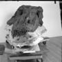 Sue T. rex skull