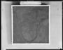 Pentacrinus Sea Lilly; Hall 37. Pentacrinus subangularis Miller.  Lias, Lower Jurassic, Holzmaden, Germany. Collected by Bernard Huff Geology specimen P1888