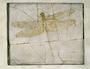 Dragonfly Fossil specimen Cymatophlebia longialata. Jurassic, Solnhofen, Bavaria. Limestone Geology specimen P2002