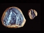 Arthropleura cristata Mazon Creek fossil Geology specimen PE29007