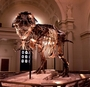 Sue T. rex