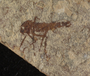 Fossil insect.