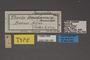 95456 Thecla deidamia T labels IN