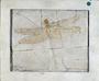 Dragonfly Fossil Cymatophlebia longialata.  Jurassic, Solnhofen, Bavaria. Limestone Geology specimen P2002