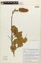 Hymenaea courbaril image